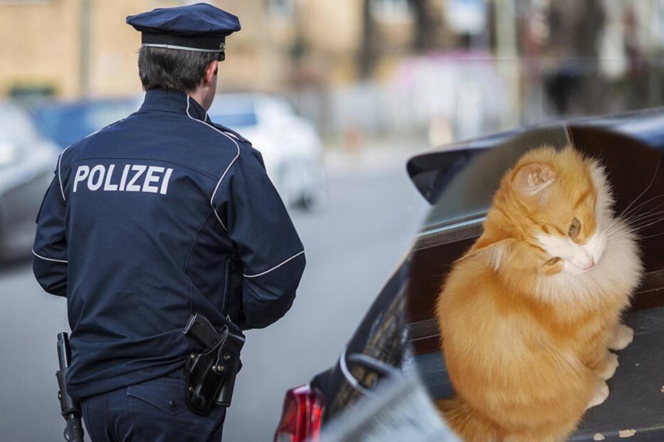 Großeinsatz in Schwarzenberg: Neun Polizisten jagen einen Kater