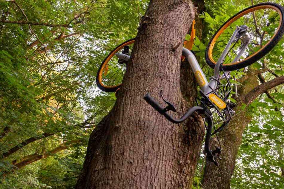 Überall in der Stadt kann man diese eigenwilligen Kunstwerke aus den gelben Fahrrädern entdecken.
