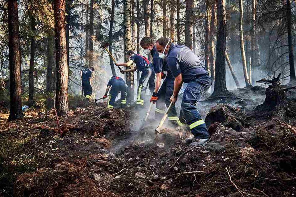 Insgesamt 19 mal brannte es 2018 im Nationalpark – 17 mal waren illegale Lagerfeuer die Ursache.
