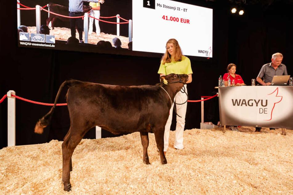 Teuerste Kuh Europas! Dieses Kalb ist mehr als 40.000 Euro wert