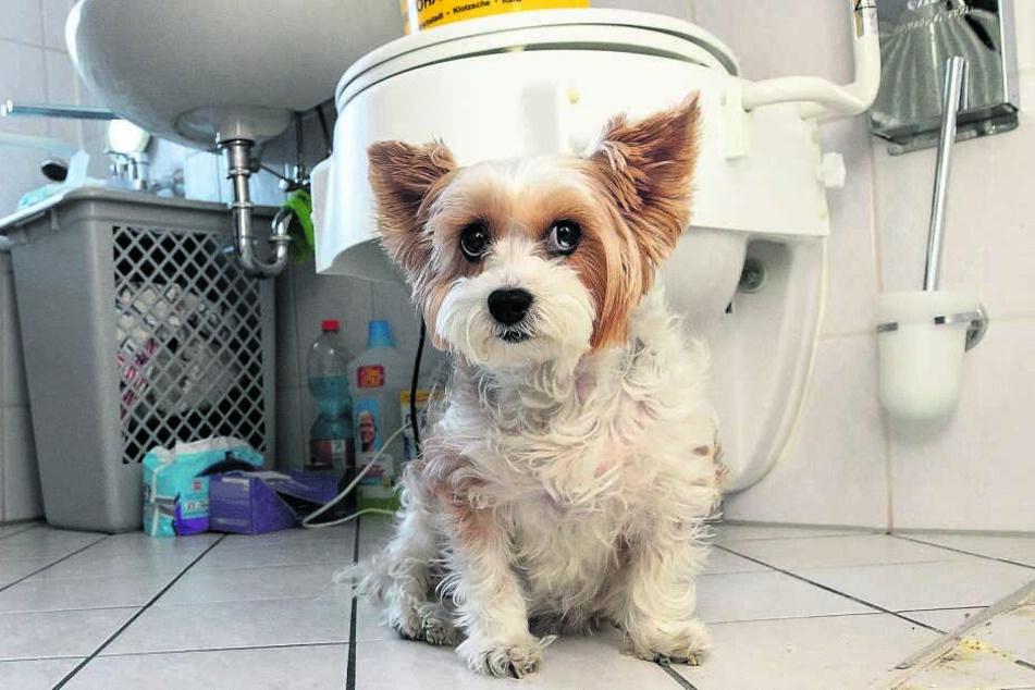 Hund Jackie (10) schlägt an, wenn er Ratten hört. Der gefüllte Eimer soll Ratten aufhalten, über den Klodeckel einzudringen.