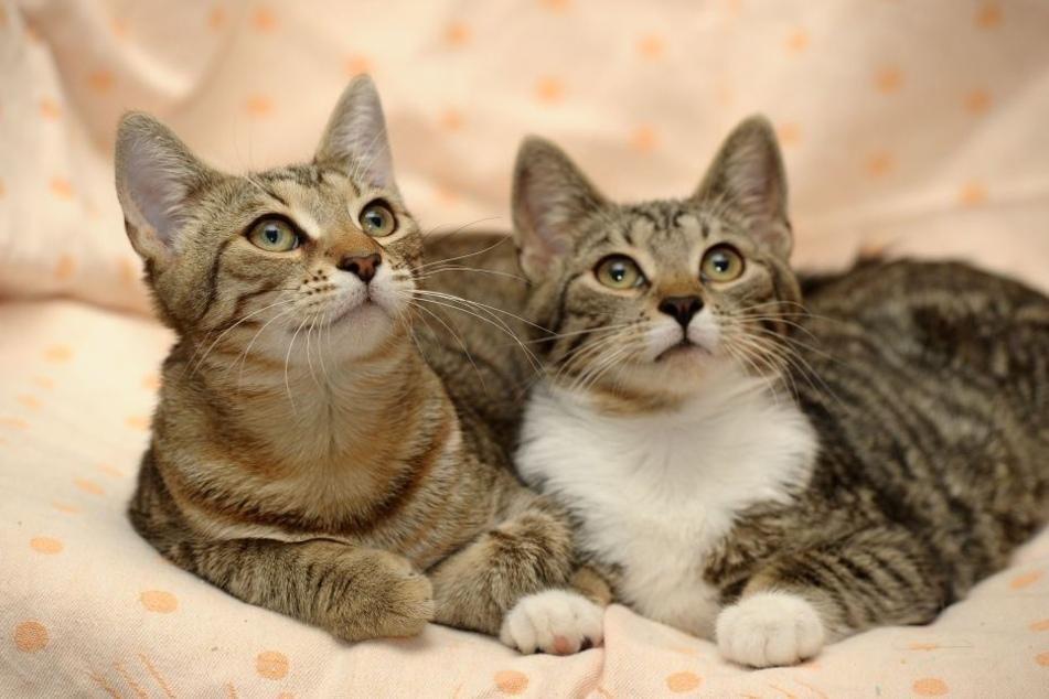 Eigentlich war der Adventskalender für Katzen.