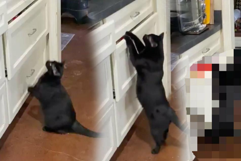 Katze macht sich an Schrank zu schaffen und verblüfft ihre Besitzerin