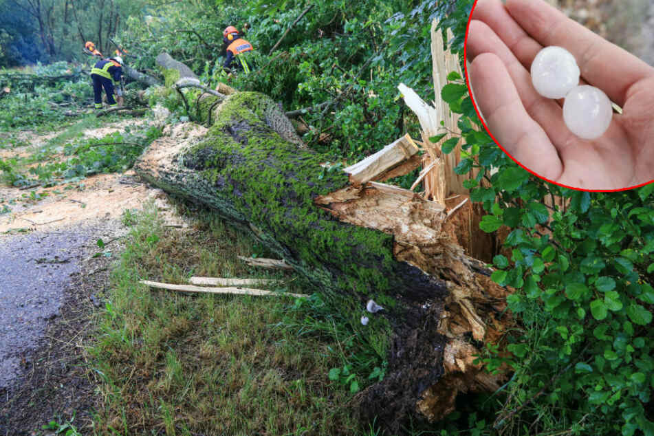 Unwetter wütet in Thüringen: Bäume umgestürzt, Dächer abgedeckt