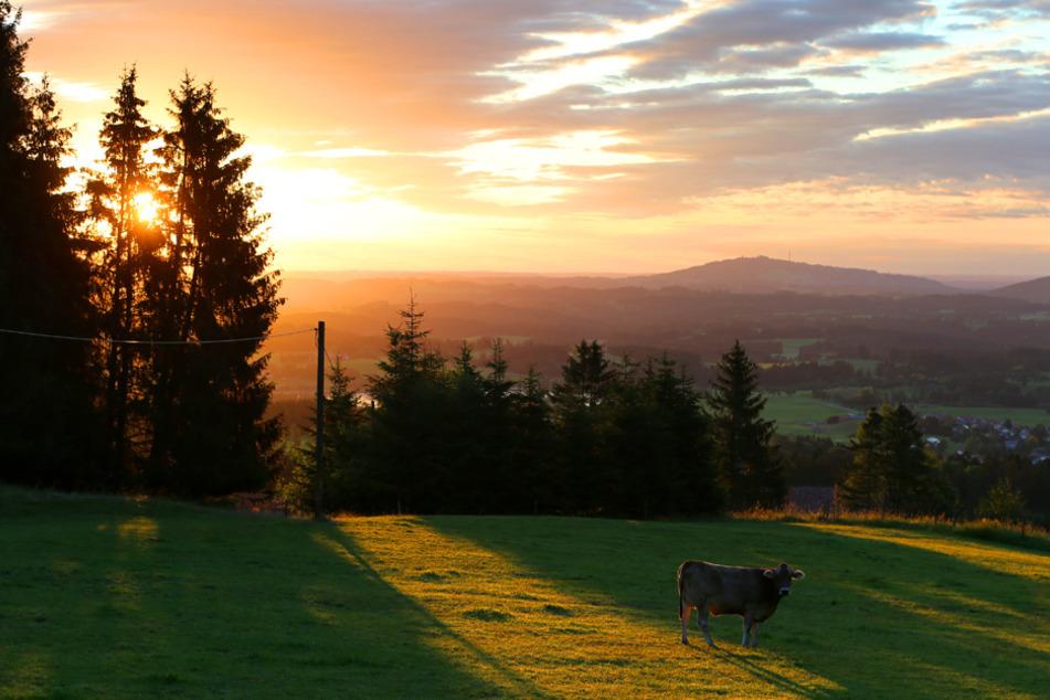 Sonne über dem Freistaat. Doch bereits ab Nachmittag könnte sich das Bild wandeln. (Symbolbild)