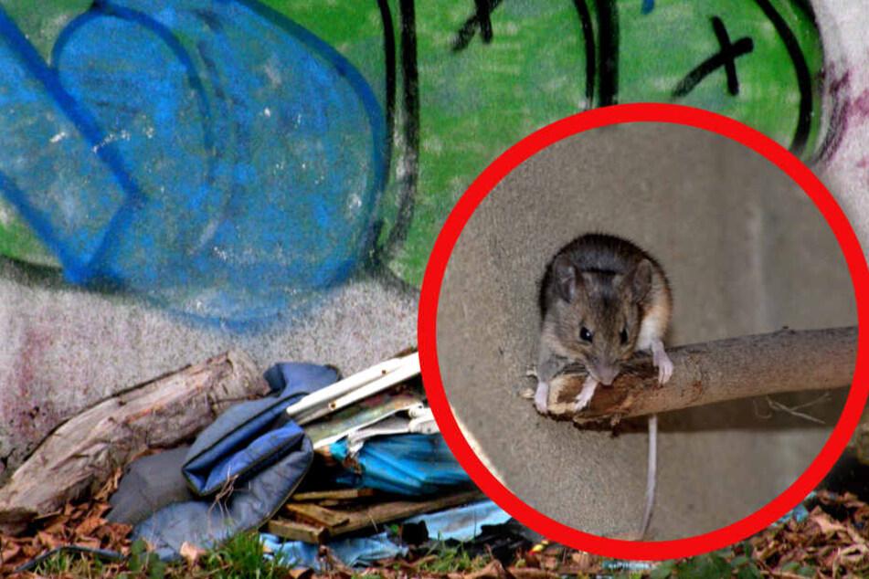Illegal abgelagerter Müll kann Schädlinge wie Ratten anziehen.