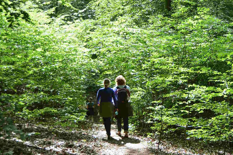 Zwei 59-jährige Schwestern sind beim Wandern auf dem Bühlertalwanderweg von Cröffelbach schwer verletzt worden. (Symbolbild)