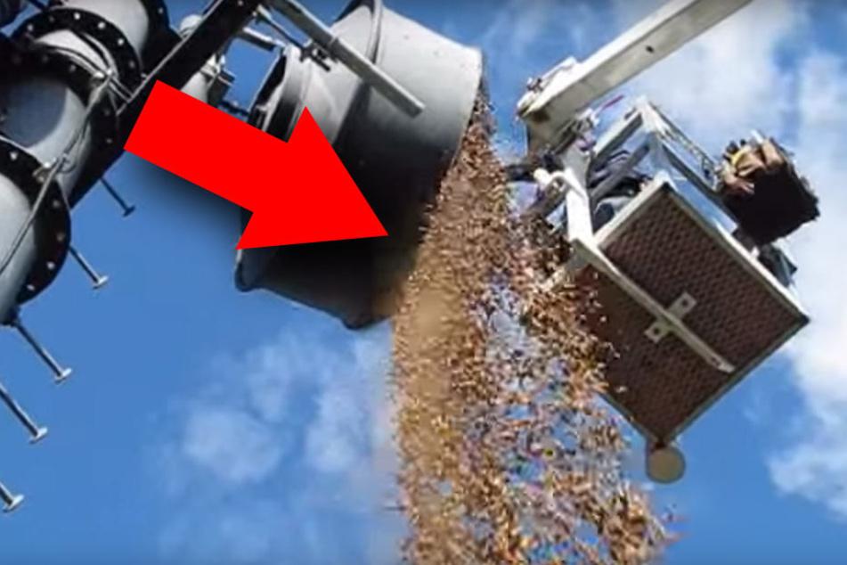 Specht lagert über hundert Kilo Nüsse in Antenne