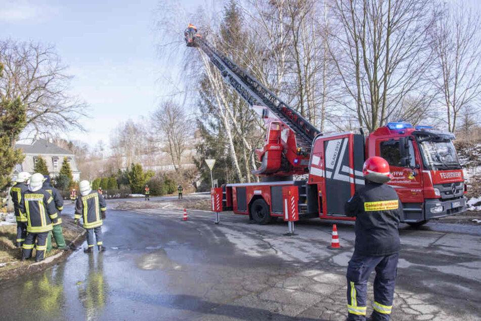 In Wiesa musste die Feuerwehr nach dem Sturm zwei Bäume abtragen.
