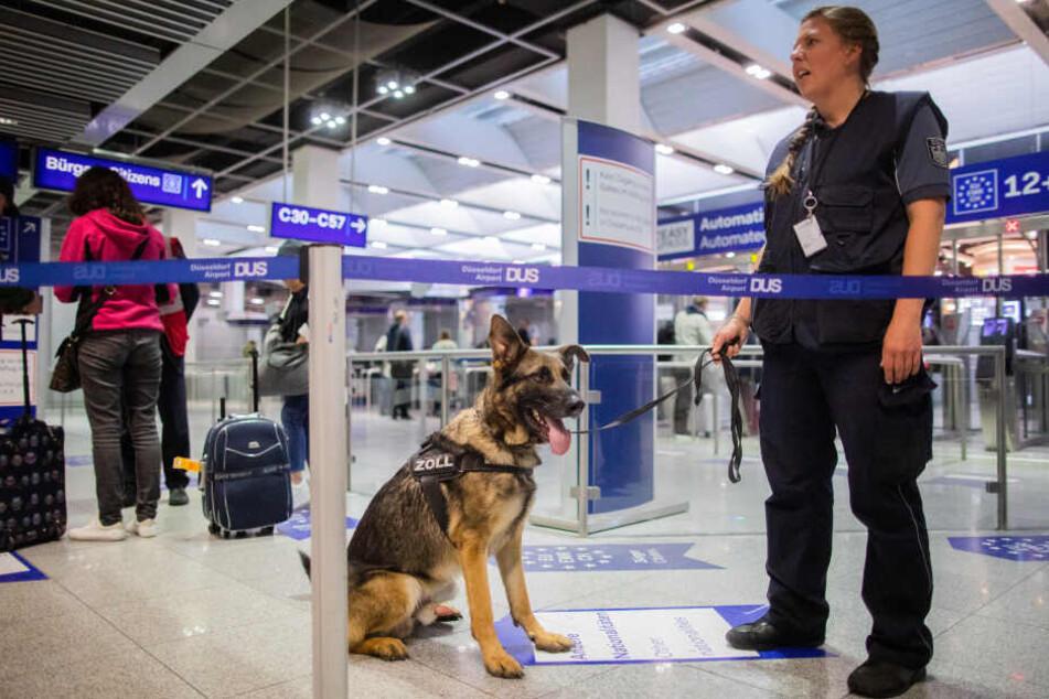 Zollhund Luke wartet am Flughafen mit Hundeführerin Sabine Mohren auf seinen Einsatz.