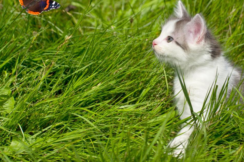 Katze verschwindet bei Familienausflug: 12 Jahre später geschieht das große Wunder