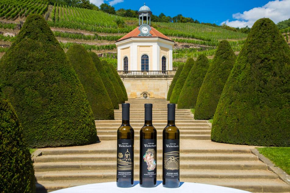 Hier kann die Welt des sächsischen Weines entdeckt werden.