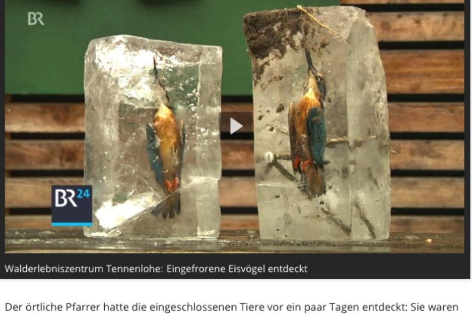 In Franken hat ein Pfarrer zwei Eisvögel in einem Weiher gefunden: Die Tiere sind zu Eisstatuen erstarrt.