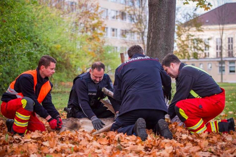 Gemeinsam fesselten die Feuerwehr und die Polizei das Tier, ließen es am Ende unverletzt wieder frei.