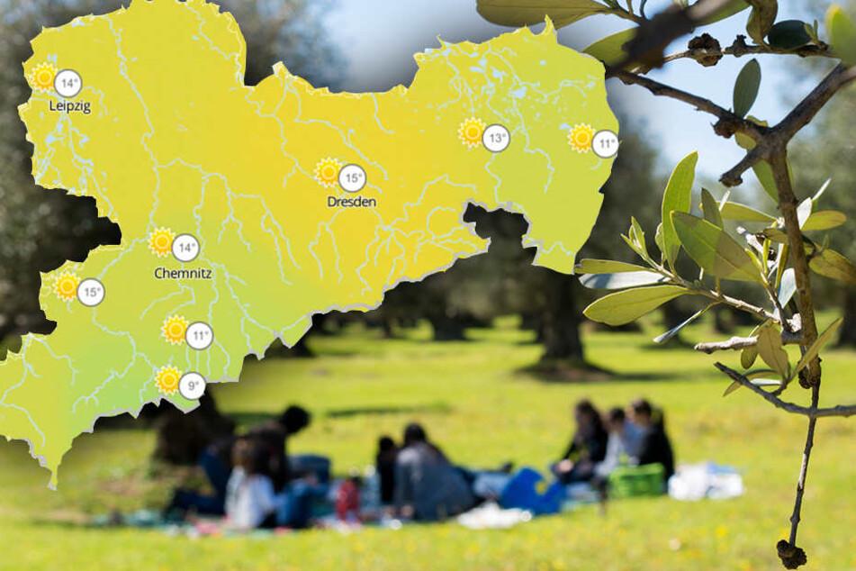 24 Grad! Den Sachsen droht am Wochenende der erste Sonnenbrand