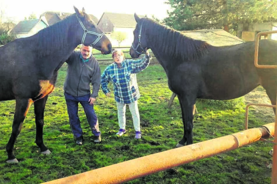 Plötzlich hatten Lutz Laue (55) und seine Nachbarin Annemone Kuhnt (60) zwei Pferde zu Besuch.
