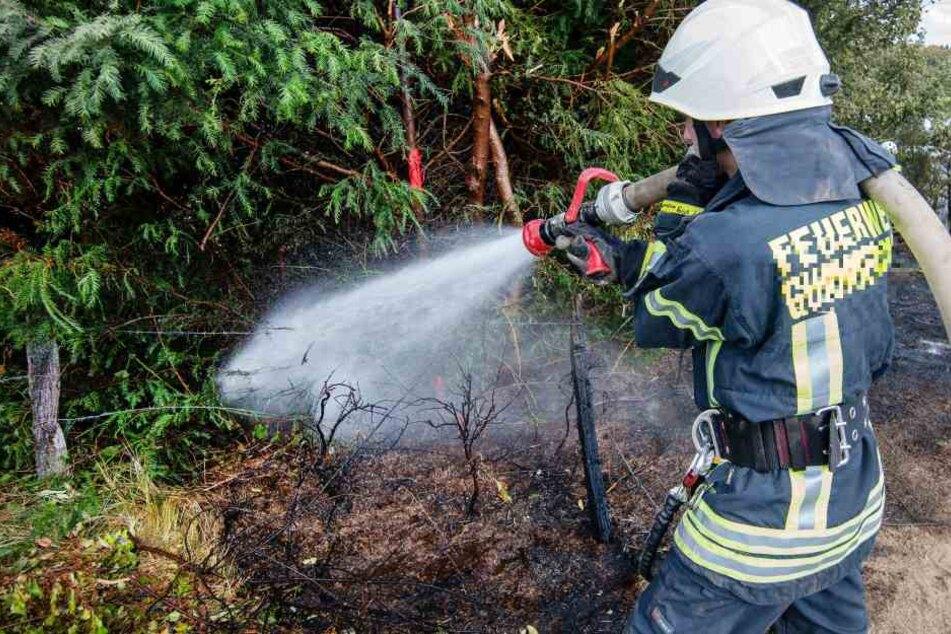 Der 22-Jährige hatte in einem Wald nahe Kleinensee gezündelt. (Symbolbild)