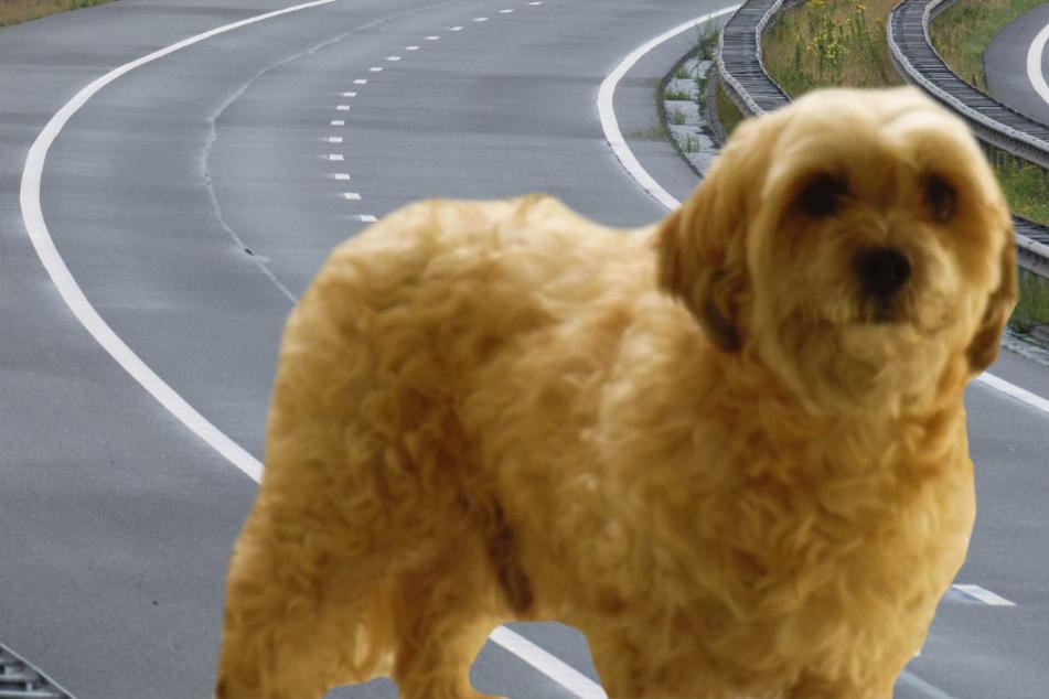 Die Polizei fragt: Wer kennt diesen Hund oder seinen Besitzer?