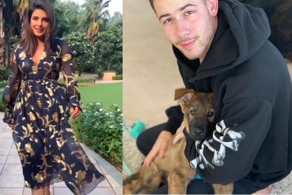 Ein Herz und eine Seele: Priyanka Chopra hatte mit ihrem Geschenk in Form des Schäferhundes Gino viel Erfolg bei Ehemann Nick Jonas.