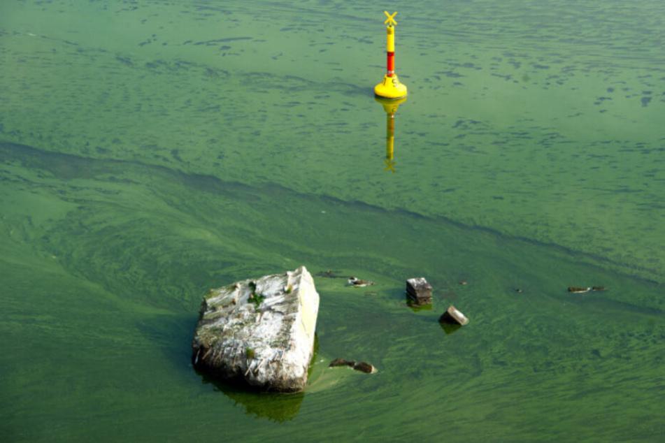 Badeurlaub in Gefahr! Blaualgen bedrohen Strände an der Ostsee