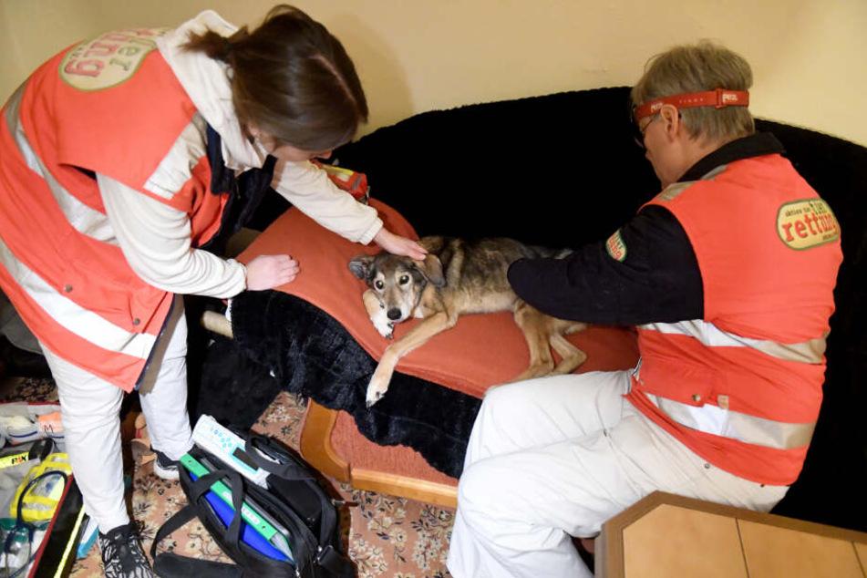 Malin Schmidt und Gabor Horvath behandeln einen Hund.