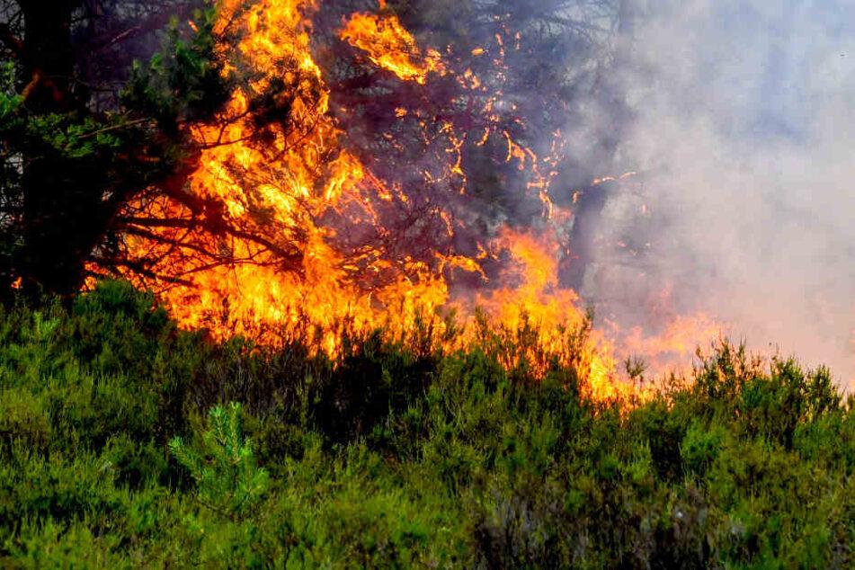 Teilweise höchste Gefahrenstufe! Waldbrandgefahr in Berlin und Brandenburg