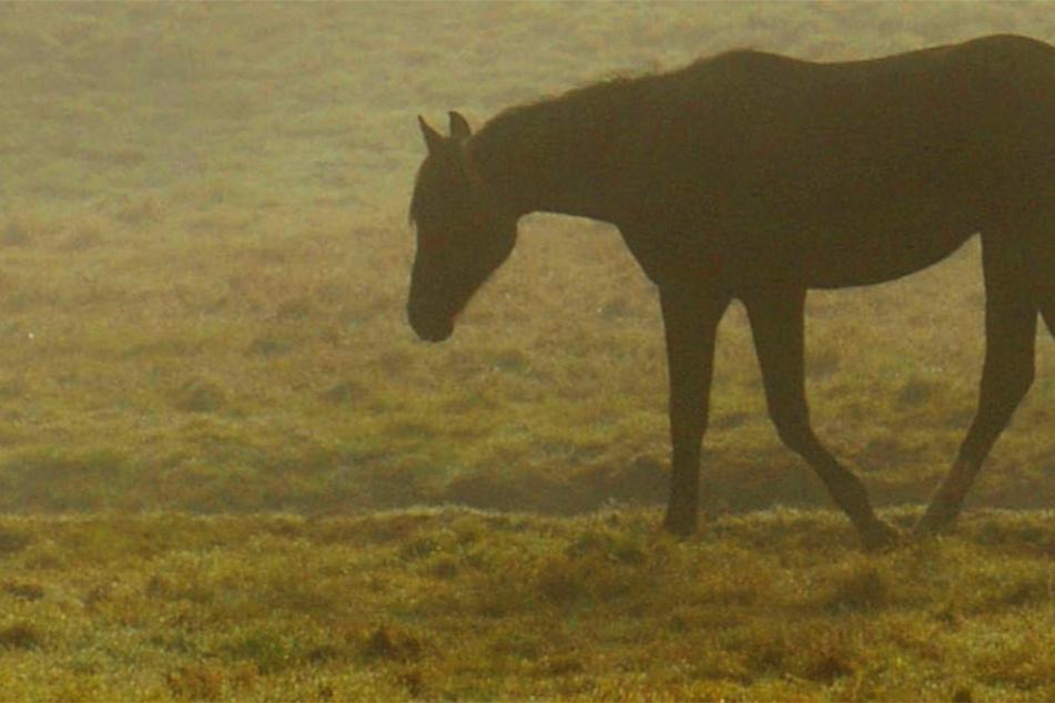 Das Pferd wurde auf einer Koppel in der Gemarkung Völzberg angegriffen (Symbolbild).