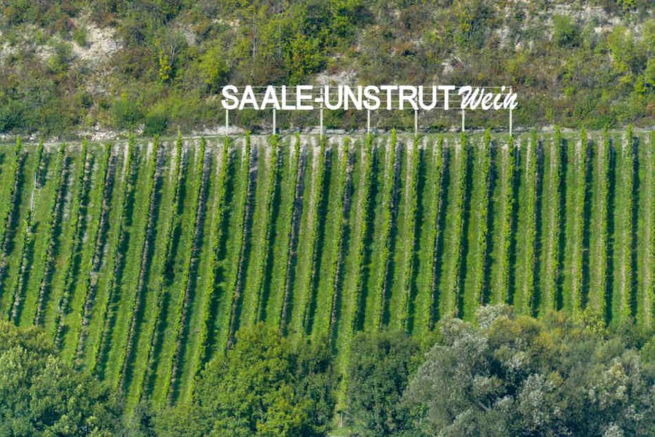 Die Winzer an Saale und Unstrut öffnen an diesem Wochenende ihre Weinkeller.