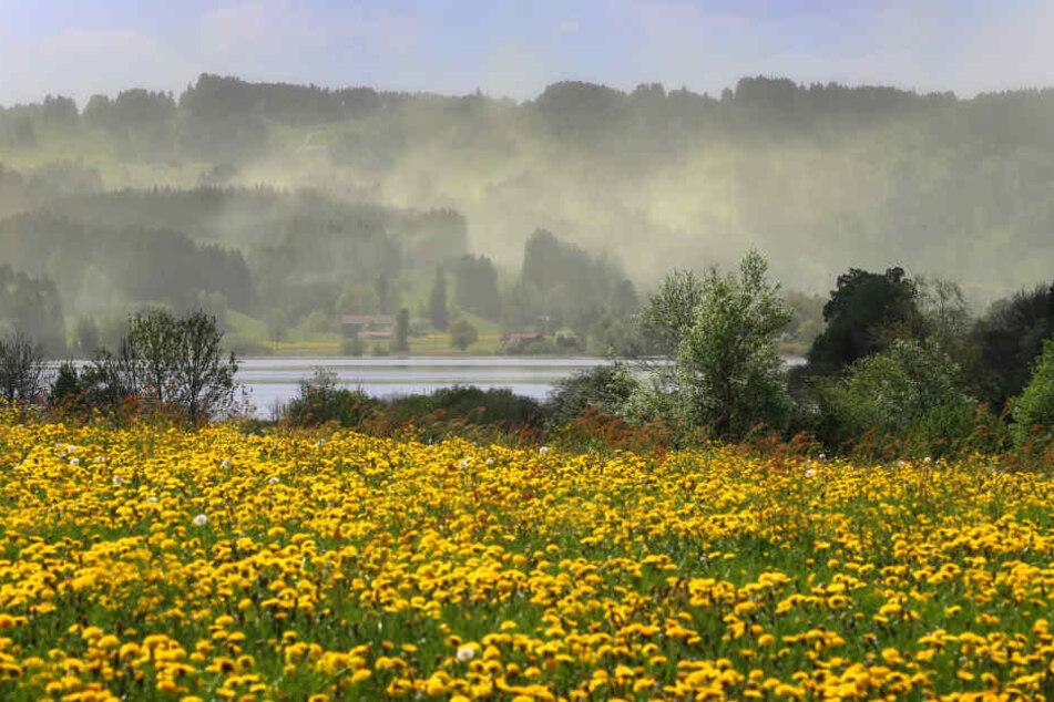 Blütenstaub über dem Niedersonthofener See in Bayern: Ein Graus für alle Allergiker.