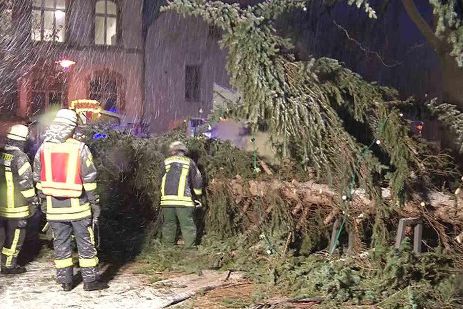 Die Kameraden der Magdeburger Feuerwehr rückten dem Baum mit der Kettensäge zu Leibe.