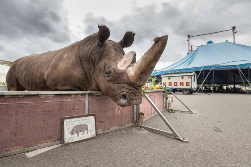 Circus Krone gastiert ab Mittwoch in Zwickau.