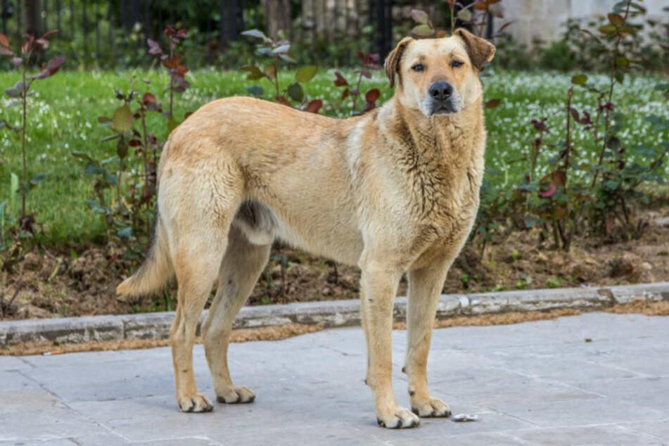 Hund vermisst? So findet Ihr Euren Vierbeiner wieder