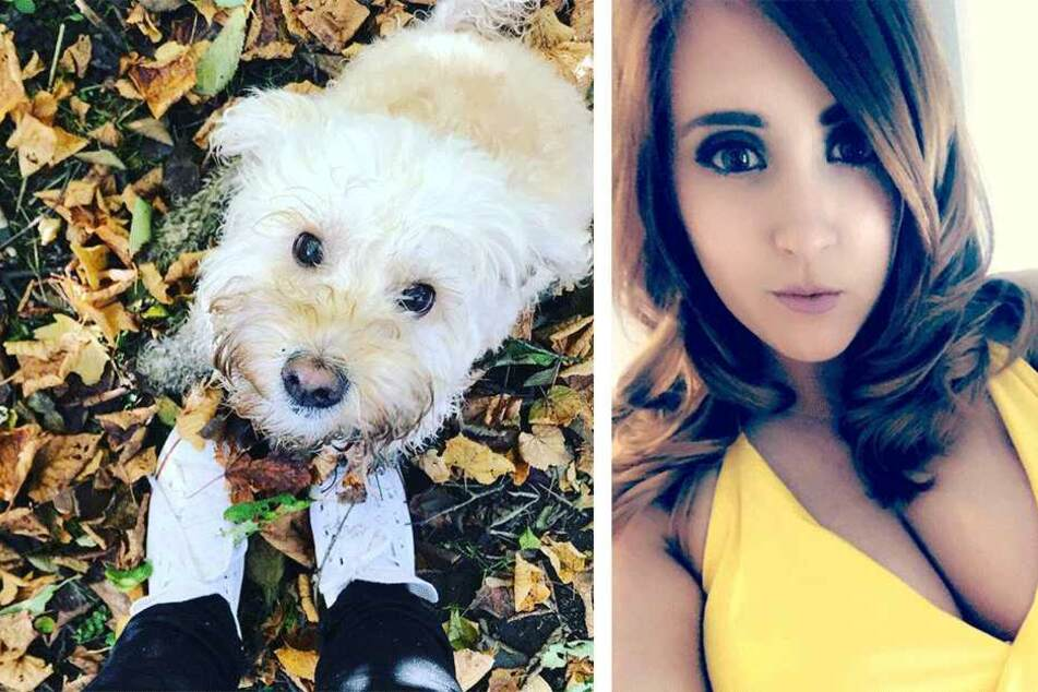 Frau lässt ihren Hund allein zu Haus und muss es bitter bereuen