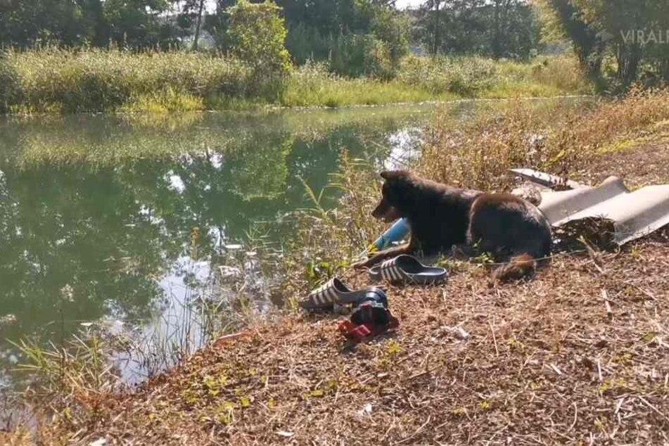 Loyaler Hund wartet geduldig am Ufer auf ertrunkenes Herrchen