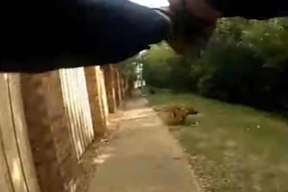 Der junge Polizist schießt dreimal auf den Labrador-Mischling. Mit einer Kugel trifft er Margarita Victoria Brooks (30).