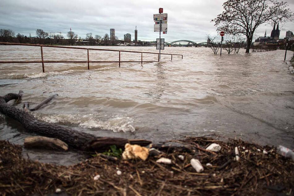 Hochwasser in Köln steigt: Stadt baut Stege auf