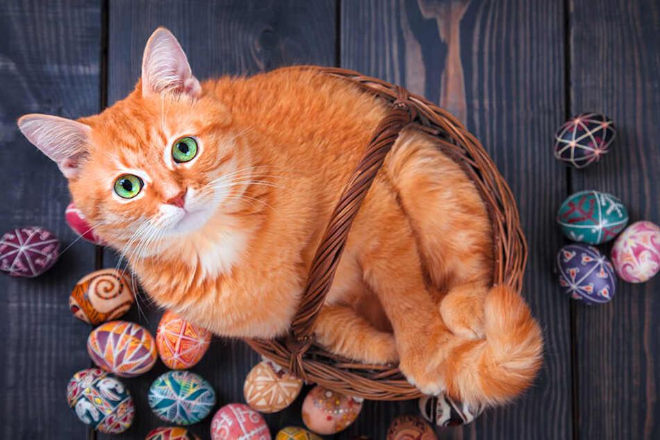 Katzen dürfen ab und zu auch mal ein Ei essen.
