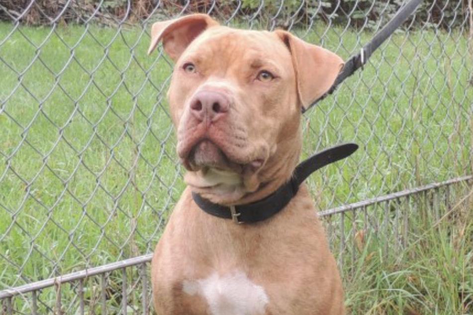 Hund Rudi wurde an einer Parkbank angebunden und zurückgelassen.