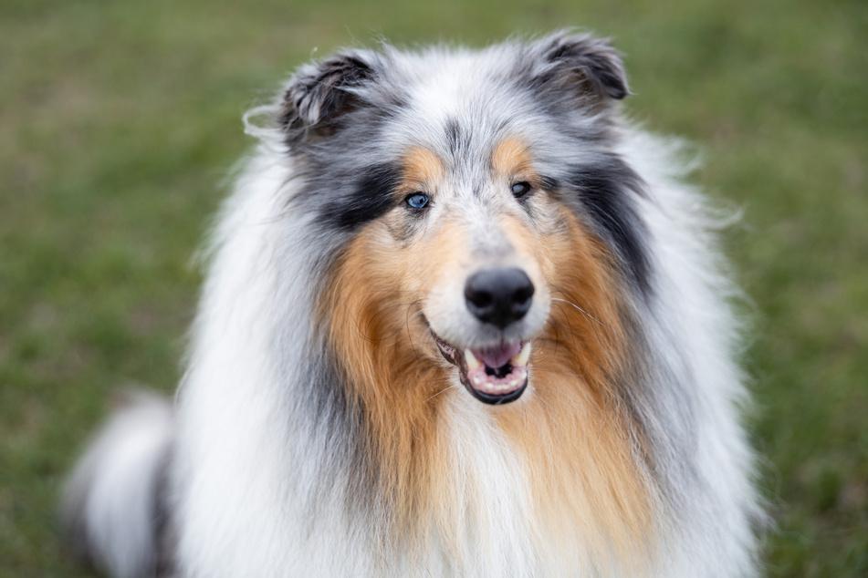 Das sind 7 der berühmtesten Hunde der Welt! Kennt Ihr sie alle?