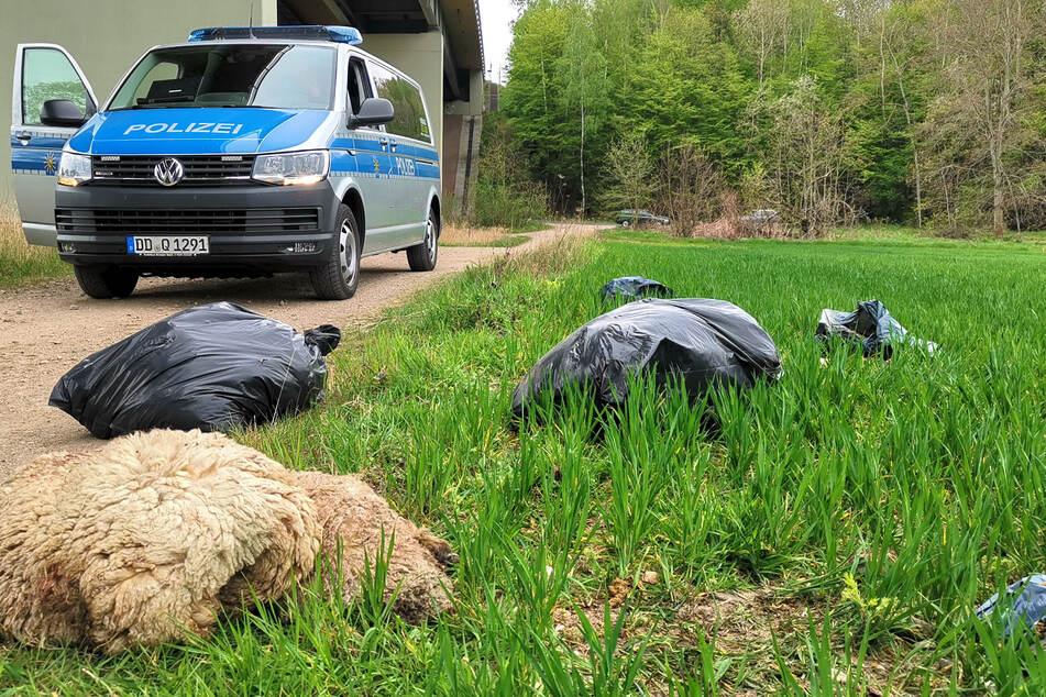 Immer wieder wurden in den letzten Tagen im Grimmaer Muldental Müllsäcke mit toten Lämmern und Schlachtabfällen gefunden, wie hier am Fuße der Autobahnbrücke (A14) bei Wednig.