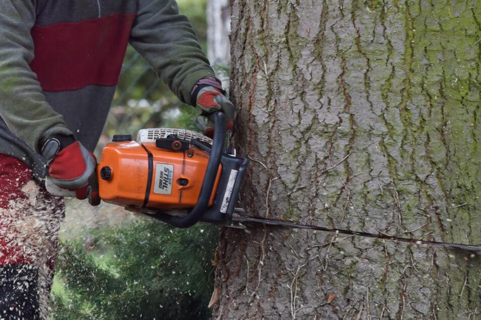 Tragischer Unfall bei Baumfällarbeiten: 39-Jähriger erliegt seinen Verletzungen