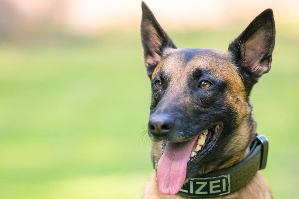 Mann nach Verfolgungsfahrt von Polizeihund gestellt