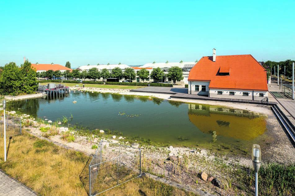 Fürs Konzert-Wochenende: Hier entsteht Dresdens erste Seebühne