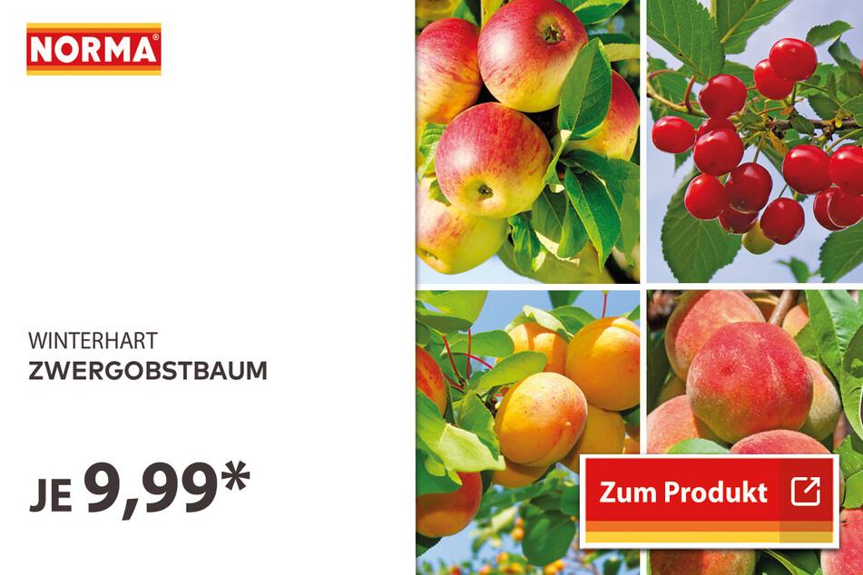 Zwergobstbaum für 9,99 Euro