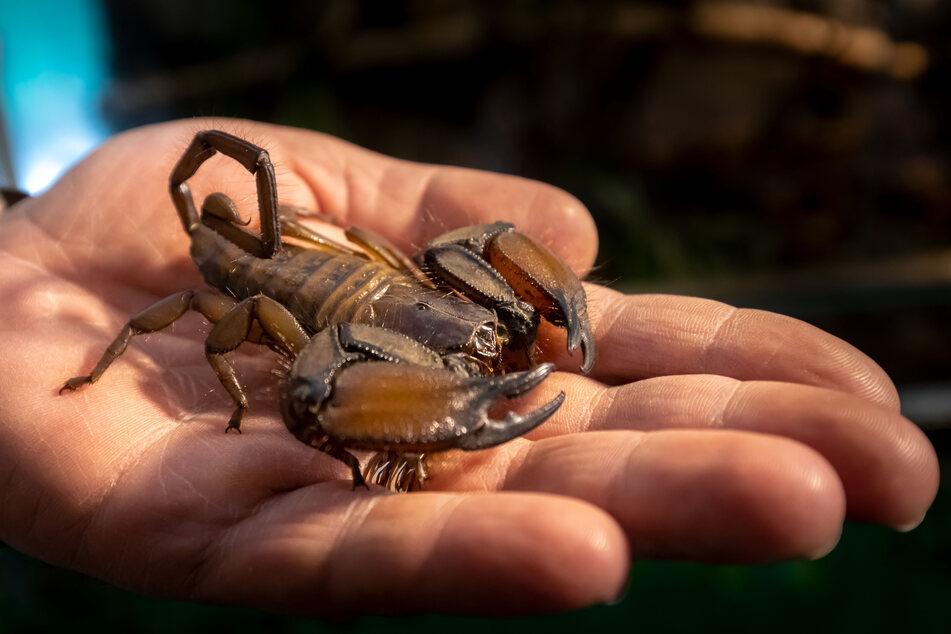 Ob Skorpion, Spinne, Schlange oder Gecko: Ingo Renner musste für jedes seiner Tiere eine neue Bleibe finden.