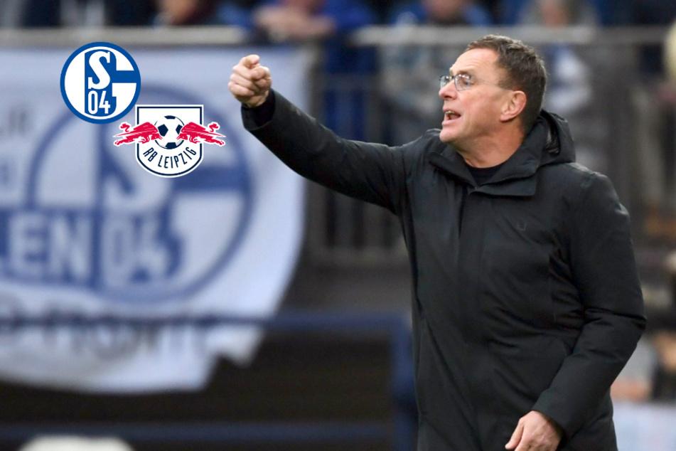 """""""Rangnick oder nix!"""" Schalke braucht 'nen Retter, RB-Krösche sagt ab"""