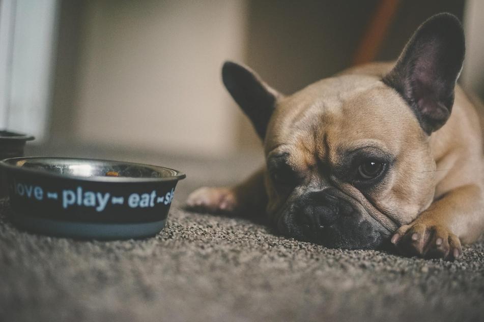Hund frisst nicht: Warum und was ist zu tun?