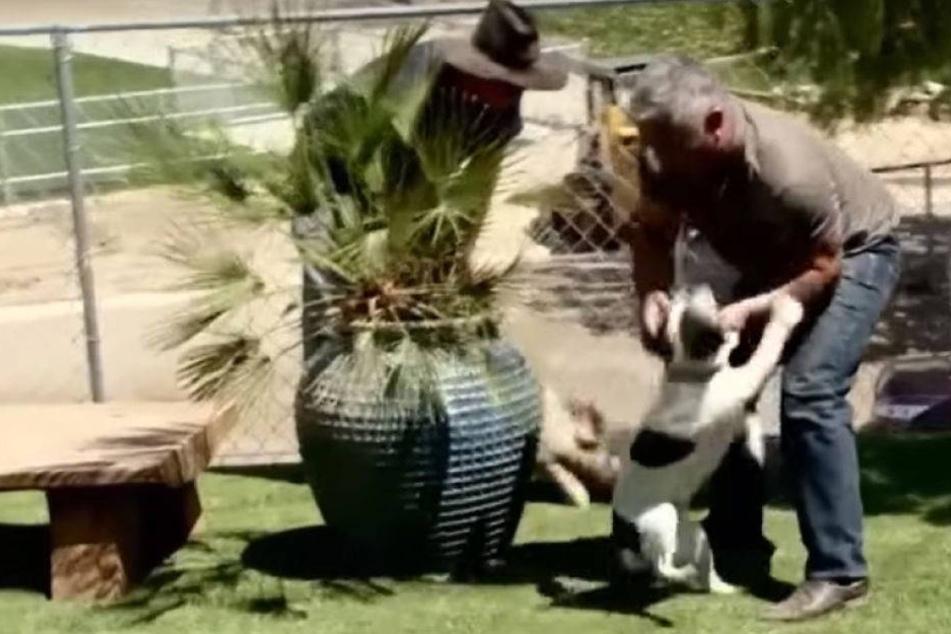 Ermittlungen wegen Tierquälerei gegen Hundeflüsterer Cesar Milan