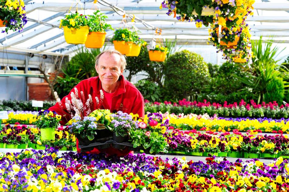 Bei Gärtner Frank Zülchner (59) gibt es selbst gezogene Frühblüher.