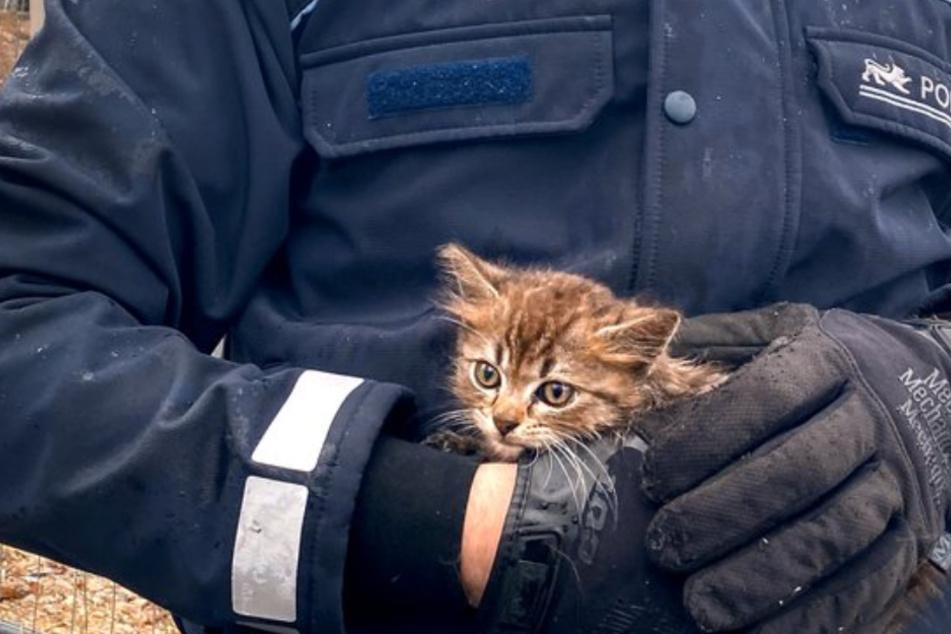 Passant hört verzweifeltes Katzenjammern und findet Samtpfote in ganz misslicher Lage vor